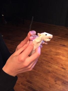 Taxidermied rat turned puppet