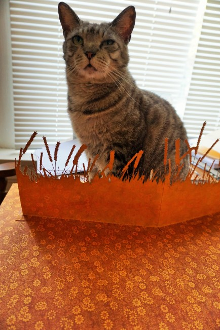 My cat chilling on pop-up wheat :)